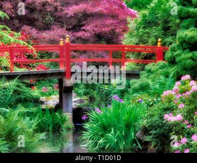 Teich mit blühenden Rhododendren und Iris und der Brücke. Kubota japanische Gärten, Seattle, Washington Stockbild
