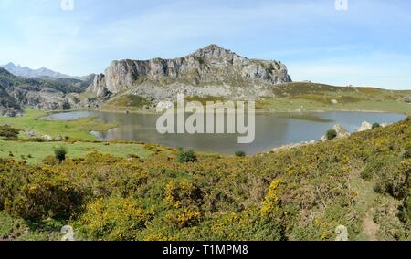 Überblick über See Ercina mit westlichen Stechginster (Ulex gallii) Blühende im Vordergrund, Seen von Covadonga, Picos de Europa, Asturien, Spanien, August Stockbild