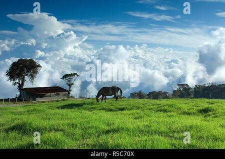 Costa Rica Turrialba Volcano Nationalpark, tropischen Nebelwald, Towering cumulus Wolken, Bauernhof Stockbild