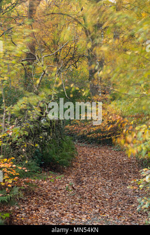 Herbst Farben in einer Gasse in der Conway Tal, Snowdonia, Wales, Großbritannien Stockbild