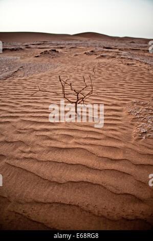 Toter Baum in Wüstenlandschaft; Sahara Wüste; Marokko Stockbild
