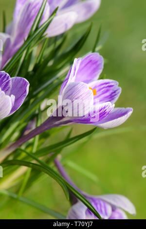 Blumen 1009 Stockbild