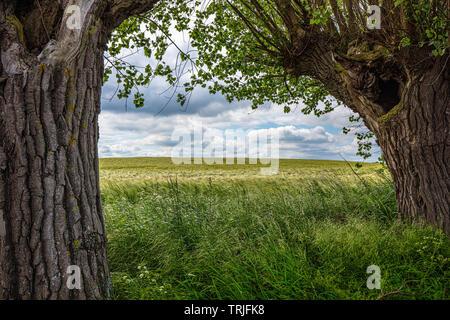 Über einem Feld Struktur sind dramatische Wolken, im Vordergrund ist grünes Gras und links und rechts sind die alten Weiden Stockbild