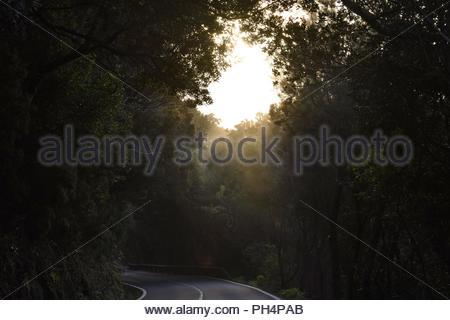 TF-12 Straße durch dichten Wald mit lorbeerbäumen. Nebel im Anagagebirge in der Nähe von Las Mercedes, im Nordosten von Teneriffa Kanarische Inseln Spanien bilden. Stockbild