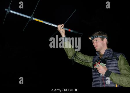 David Bavin radio-tracking Baummarder (Martes martes) Nachts nach Freigabe während einer Wiedereinführung Projekt aus Schottland, Wales, Sept. 2016. Stockbild