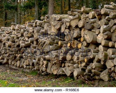 Holzstapel in Wald Hampshire England Stockbild