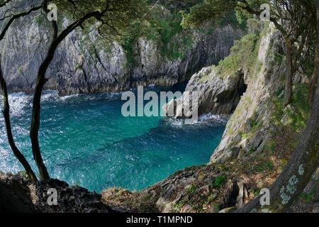 Moralische Cove auf Cape Emeterio, Überhang mit Steineichen (Quercus ilex), Pimiango, Asturien, Spanien, August 2016. Stockbild