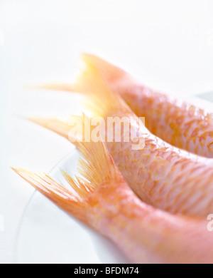 Fischschwänzen Stockbild