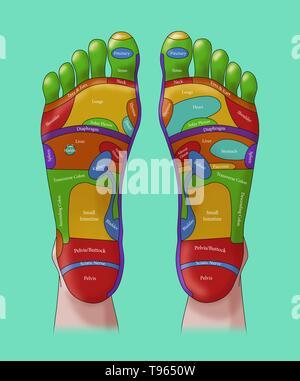 Abbildung der Füße, Fuß-Reflexzonenmassage Zonen. Eine Fußreflexzonenmassage ist eine Form der alternativen Medizin, in dem die Zonen der Füße geglaubt werden in verschiedenen Teilen des Körpers zu entsprechen. Stockbild