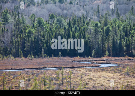 Wildnis des Algonquin Nationalpark - Kanada - Nordamerika Stockbild