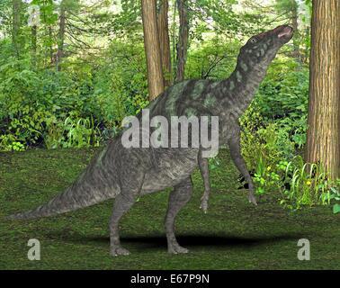 Maiasaura Dinosaurier / Maiasaura Dinosaurier Stockbild
