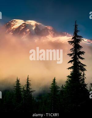 Nebel-Bäume und Mt. Rainier. Mt. Rainier Nationalpark, Washington Stockbild