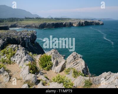 Rock Queller (Chrithmum maritumum) Blüte am Kalkstein Klippen an Pria, Asturien, Spanien, August. Stockbild