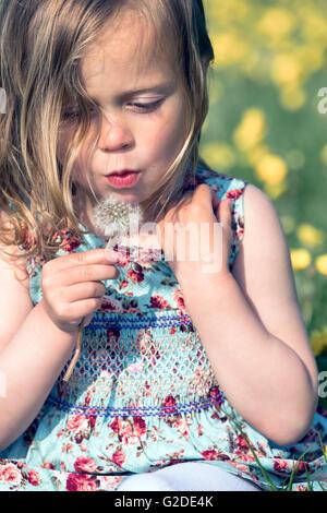 ein 3-jähriges Mädchen bläst eine Löwenzahn Uhr Stockbild