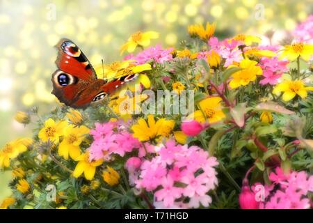Schmetterling 527 Stockbild
