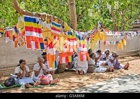 Frauen beten durch Sri Maha Bodhi Baum, Tempel von Anuradhapura, Sri Lanka Stockbild
