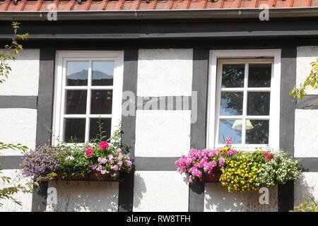 Fachwerkhaus Fenster mit Blumen und Blüten, Achim, Niedersachsen, Deutschland, Europa ich Fachwerkfenster mit Blumen und Blumenkasten, Achim, Niedersac Stockbild