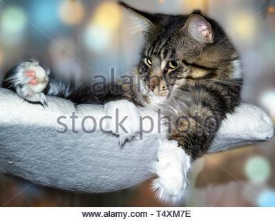 Katze liegend Stockbild