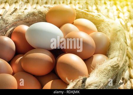 Gruppe von braunen Hühnereier, außer man weiß auf einem ibird Nest gelegt. Stockbild