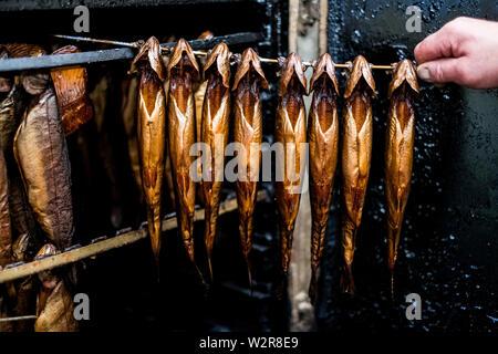 In der Nähe der Person entfernen Stange mit frisch geräucherte ganze Forellen aus einem Raucher. Stockbild