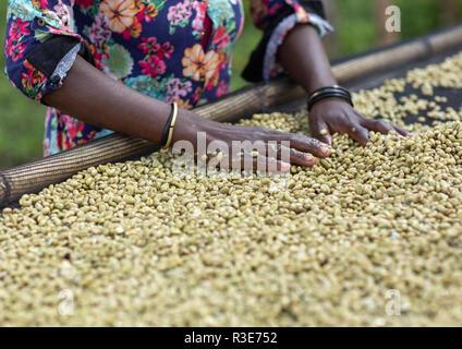Äthiopischen Frauen trocknen Kaffeebohnen in einem Bauernhof, Oromia, Shishinda, Äthiopien Stockbild