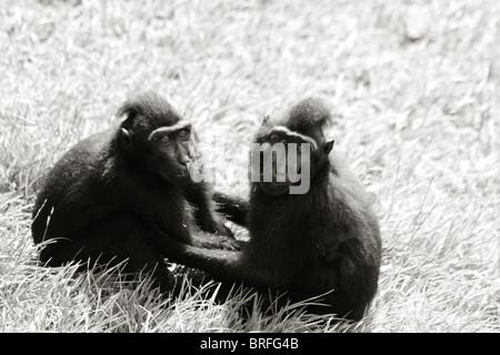 zwei Affen halten einander Stockbild
