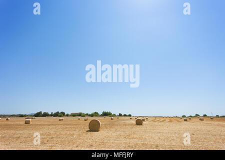 Santa Margalida, Mallorca, Spanien - Ackerland voller Strohballen nach der Ernte Stockbild