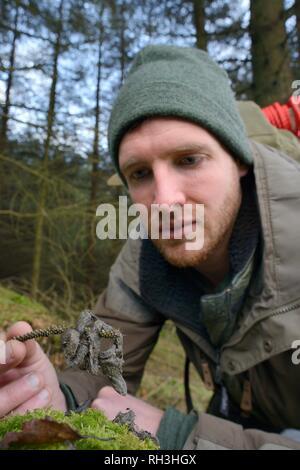 Baummarder (Martes martes) scat in Wales gefunden nach einer Wiedereinführung von Schottland, die Haare auf ein graues Eichhörnchen, eine große Beute Arten. Stockbild