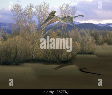 Dinosaurier Pterodactylus / Dinosaurier Pterodactylus Stockbild