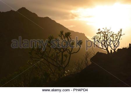 Sonne hinter Anagagebirge. Euphorbia (wolfsmilch) Pflanzen in felsige Vulkanlandschaft des nordöstlichen Teneriffa Kanarische Inseln Spanien wächst. Stockbild