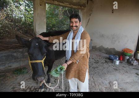 Lächelnd Milchbauern stehen in seinem Stall füttern Blätter zu einer Kuh. Stockbild