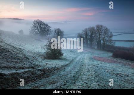 Eine frostige, Misty dawn auf Vartenham Hill, milborne Port, Somerset, England, Großbritannien Stockbild