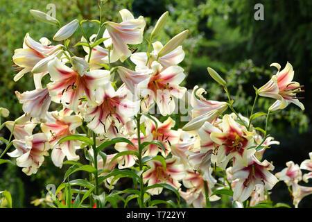 Blumen 406 Stockbild