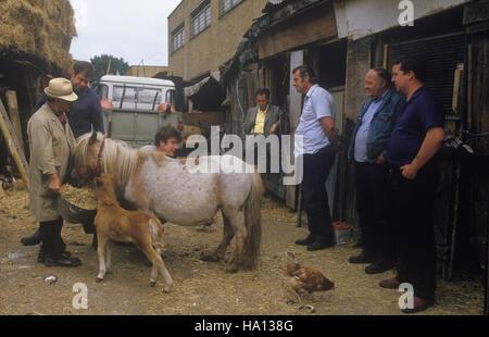 Rag und Knochen mens Pferd Hof, Hackney 1980s London Totters rag und Knochen Mann. rag n Knochen, HOMER SYKES Stockbild