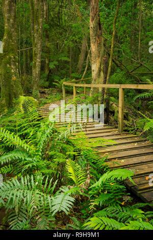 Ein Weg durch üppigen Regenwald im Tsitsikamma Abschnitt der Garden Route National Park in Südafrika. Stockbild