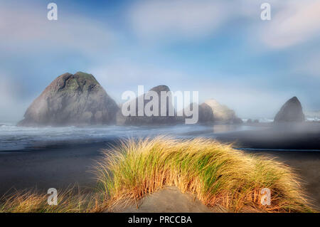 Nebel und Dune Grass am Kap Sabastian. Oregon Stockbild