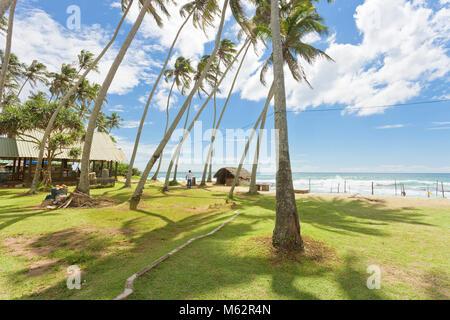 Koggala Beach, Sri Lanka, Asien - Palmen auf einer Wiese im Koggala Beach Stockbild