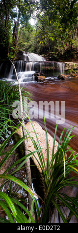 "Gulik fällt, Rand des südlichen Plateaus Maliau Basin, ""Lost World"", Borneo Stockbild"