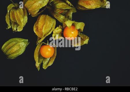 Schöne und elegante Makro Nahaufnahme einer Menge orange leckeres Obst namens Physalis aus Peru, Südamerika, mit schwarzem Hintergrund und Raum isoliert Stockbild