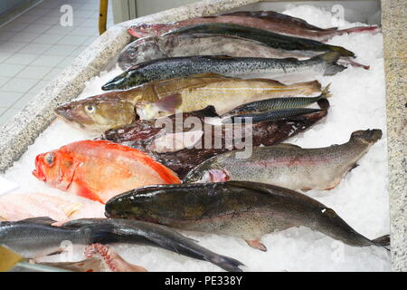 Rohe Nahrung Fisch auf Eis in einer fischtheke, Schaufenster Fischreihafen, Fischereihafen, Bremerhaven, Bremen, Deutschland, Europa ich Rohe Speisefische in Eis in Stockbild