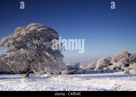 Bäume im Schnee Stockbild