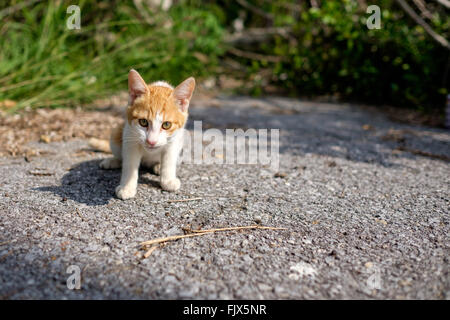 Porträt von Katze auf Feld Stockbild