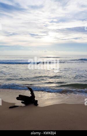Asien - Sri Lanka - induruwa - Eine geerdete Stumpf am Strand Stockbild