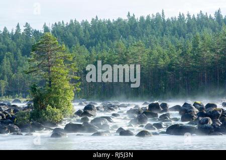 Wald und Bach Stockbild