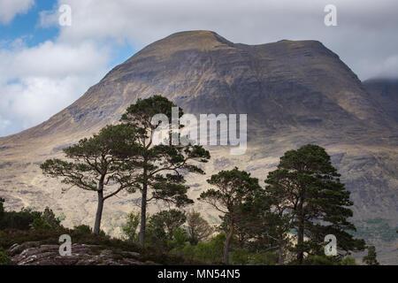 Caledonian Kiefern über Loch Torridon, Ben Damh Immobilien, Wester Ross, Schottland, Großbritannien Stockbild