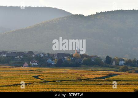 Frankreich, Haut Rhin, Alsace Wein Straße, Zellenberg Weinberg Stockbild