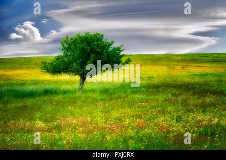 Einsamer Baum und Wildblumen. Zumwalt Prairie, Oregon Stockbild