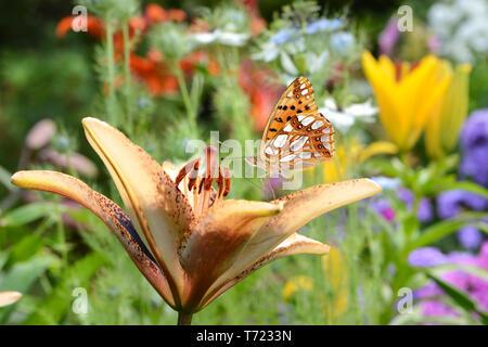 Blumen 648 Stockbild