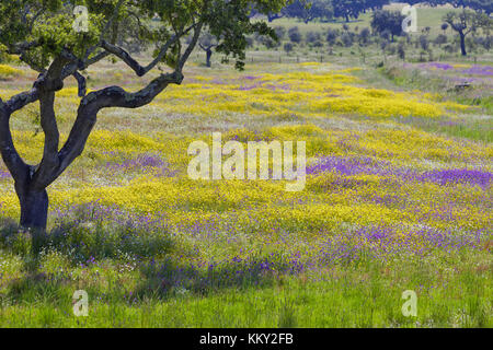 Portugal - Algarve - Blumen abgelegt - Europa Stockbild