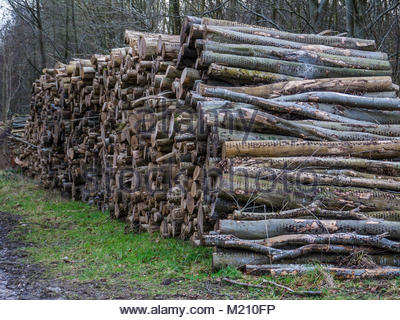 West Sussex England Holzstapel Stockbild